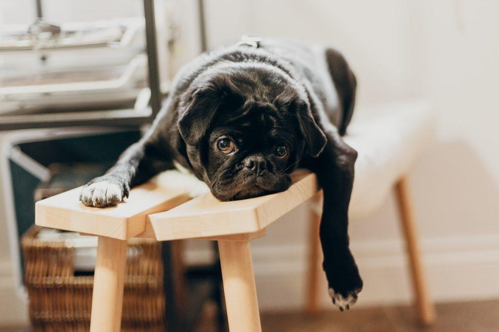 ¿como-alquilar-un-piso-con-mascotas?